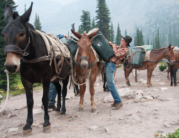 Mules bring in supplies